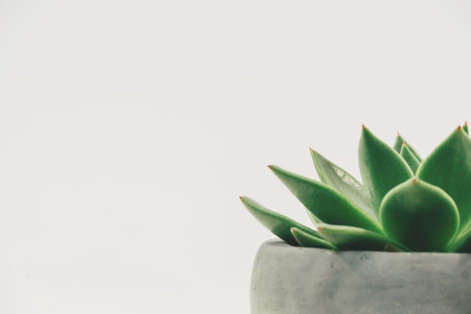 Nikki's talk | minimalism